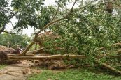Centre prioritises power, water, phones for cyclone-battered West Bengal