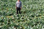 Horticulture officials campaign for food sufficiency