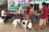 Importantance of Deworming Your Pet Dog