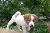 DC Tuensang issues directives to pet owners