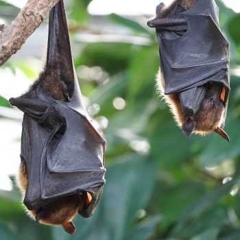 The bats return to trigger Novel Coronavirus outbreak— Lancet
