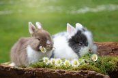 Rabbit Rearing for a Sustainable Livelihood